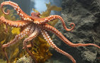 The USC Dornsife research team will study octopus behavior in the wild and in captivity at the USC Wrigley Marine Science Center on Catalina Island.