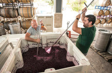 USC Dornsife alumnus Doug Hauck, left, works alongside his assistant winemaker to push down grapes during the fermentation process at Midnight Cellars Winery & Vineyard. Photo credit ©Mark Rightmire, <em>The Orange County Register</em>.