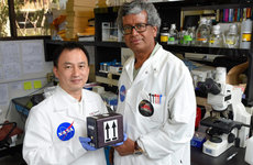 Clay Wang and Kasthuri Venkateswaran will launch fungi into space to potentially develop new medicine for use both in space and on Earth. Photo by Gus Ruelas.