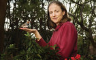 Sarah Bottjer, professor of biological sciences and psychology, discovered in her latest study that the basal ganglia pathway in zebra finches has two parallel circuits, rather than a single neural circuit as previously thought. Photo credit Eric O'Connell.