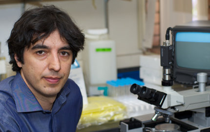 Valter Longo, associate professor of neurobiology in USC Dornsife, is corresponding author of an <em>Aging Cell</em> study indicating that mice with Alzheimer's disease showed improvements when given a protein-restricted diet. Photo by Dietmar Quistorf.