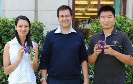 USC Dornsife's Remo Rohs (center) with Ph.D. candidates Carolina Dantas (holding a 3-D model of transcription factors bound to DNA) and Tianyin Zhou (holding a 3-D model of a nucleosome). Dantas and Zhou have each coauthored three of the papers that Rohs published in the last two months. Photo by Susan Bell.